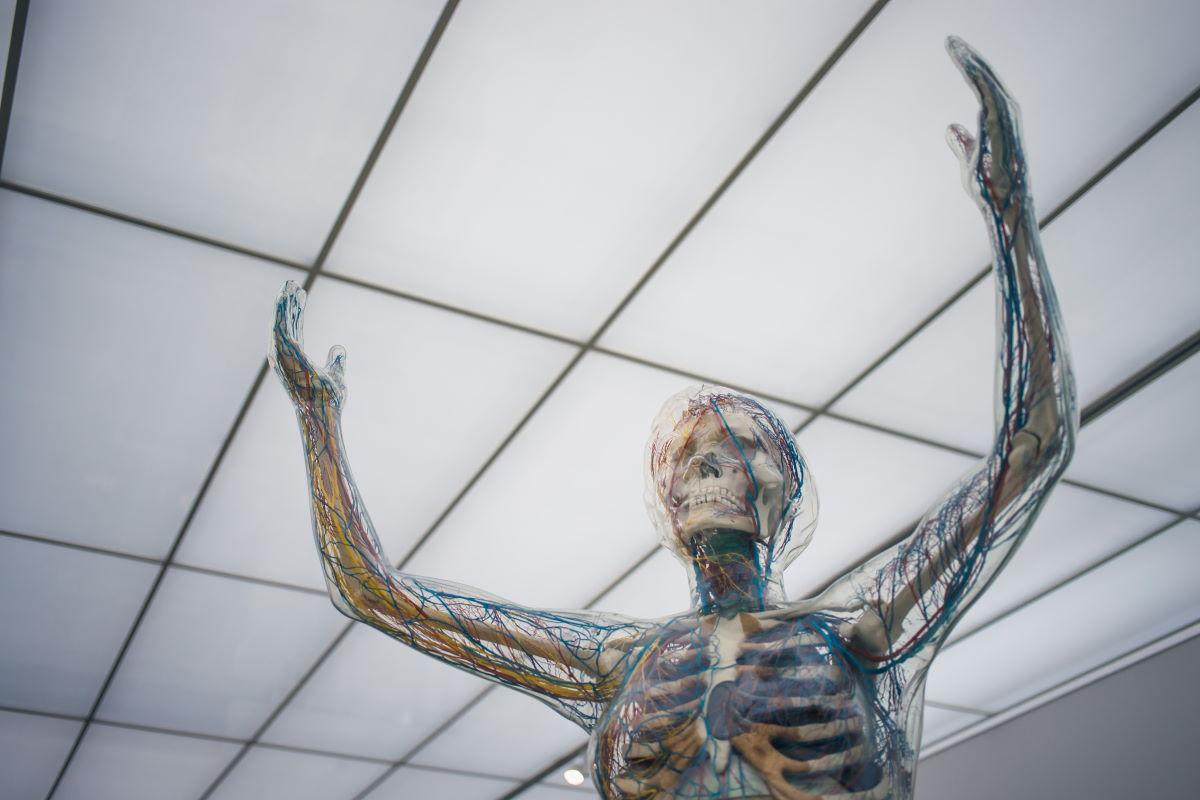 Nervous system and skeleton